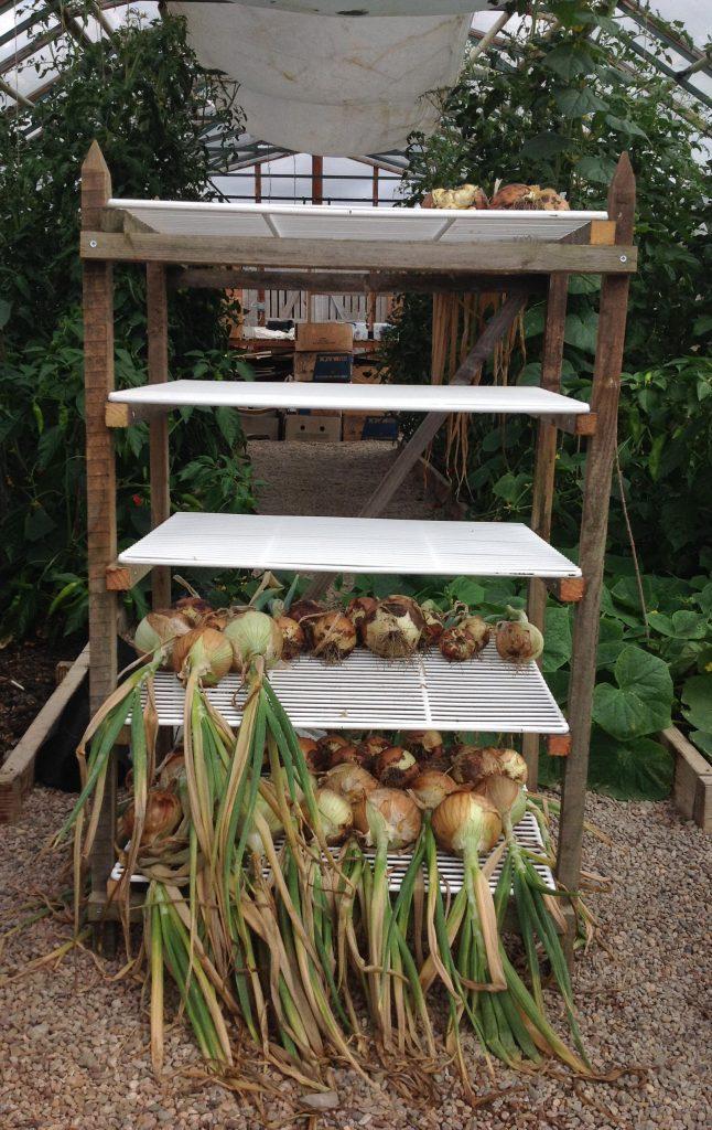 Onion drier