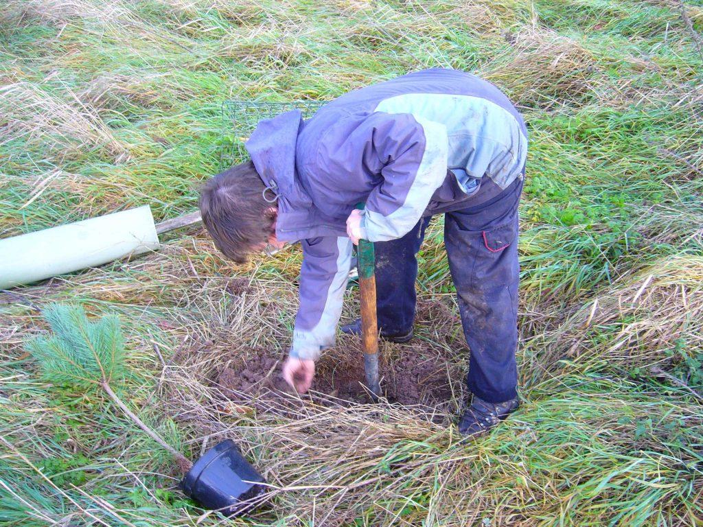 Alison tree planting