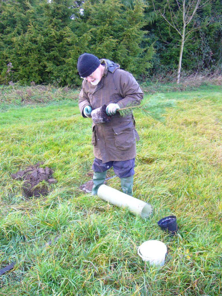 Stuart tree planting